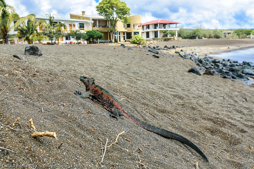 Черный пляж и отель Wittmer Lodge на острове Флореана, Галапагосы