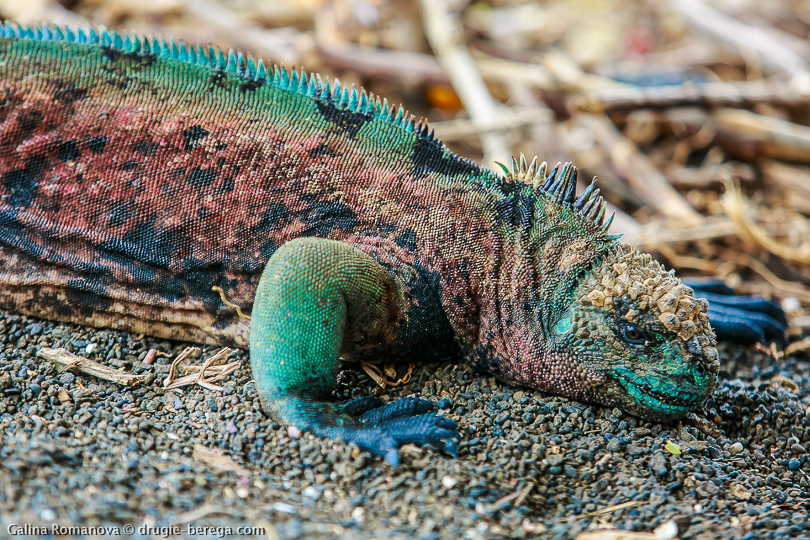 http://drugie-berega.com/wp-content/uploads/Galapagos-Floreana-island-20.jpg