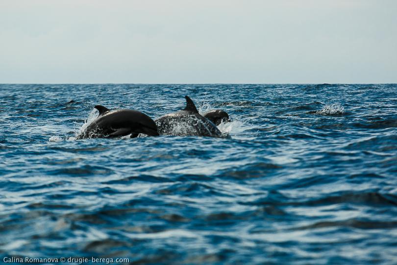 Галапагосы, остров Флореана; Galapagos, Floreana island
