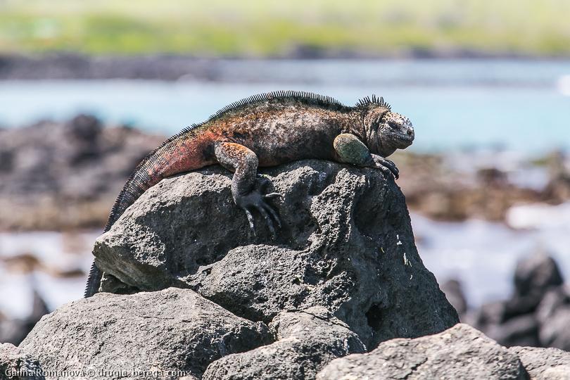 Галапагосские острова, остров Флореана; Galapagos, Floreana island