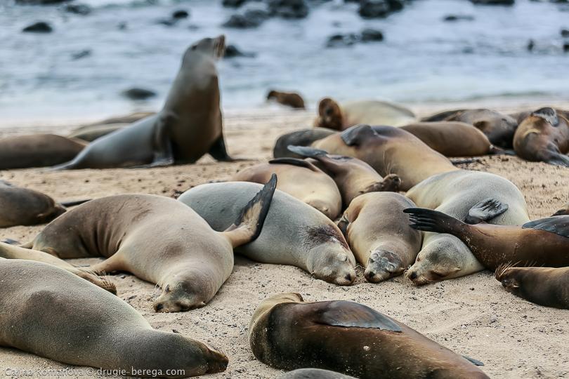 http://drugie-berega.com/wp-content/uploads/Galapagos-San-Cristobal-island-136.jpg