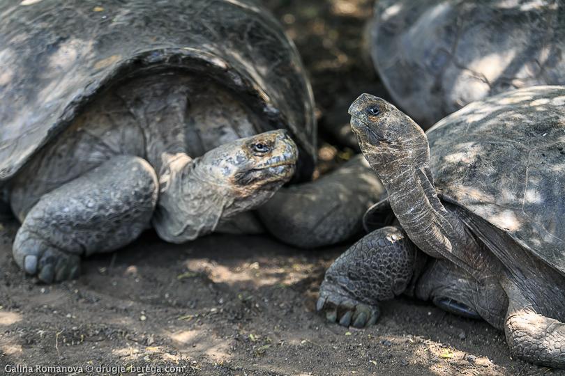 http://drugie-berega.com/wp-content/uploads/Galapagos-islands-Isabella-27.jpg