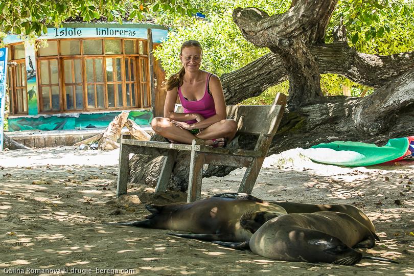 Морские львы на острове Изабела