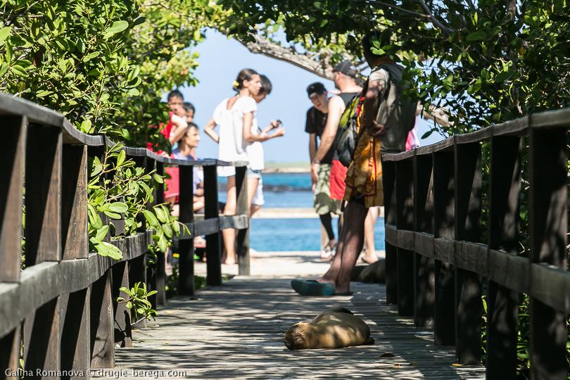 Галапагосы, остров Изабелла; Galapagos islands Isabela