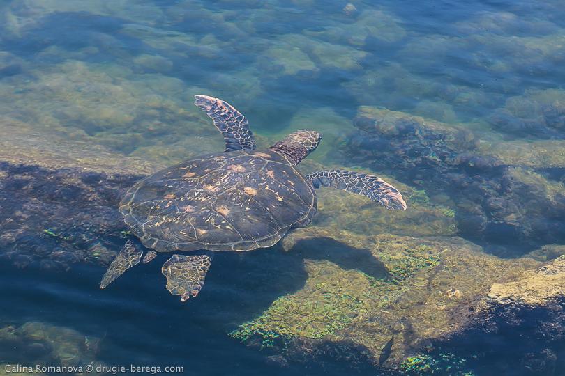 Морская черепаха на Галапагосах