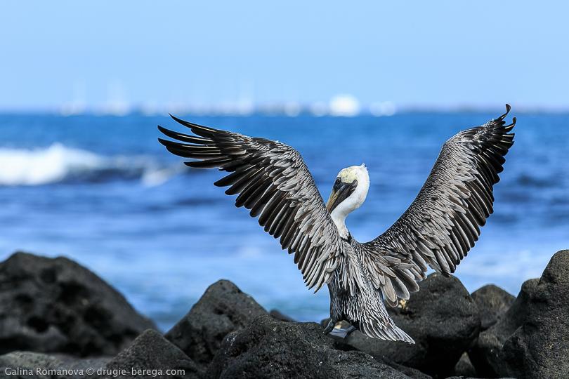 http://drugie-berega.com/wp-content/uploads/Galapagos-islands-Isabella-66.jpg