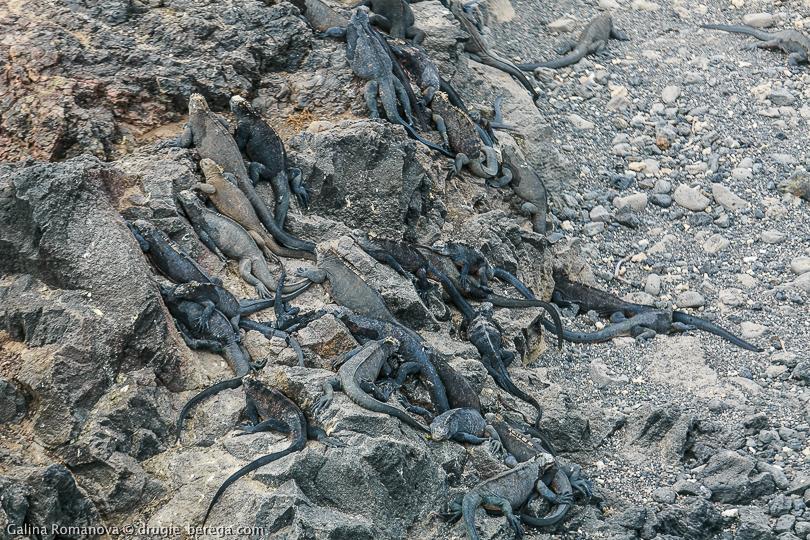 Playa del Amor на острове Isabela, Galapagos islands