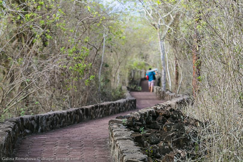 Дорога до пляжа Тортуга Бэй на острове Санта Круз, Галапагосы
