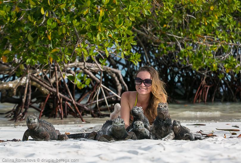 Морская игуана, Галапагосские острова