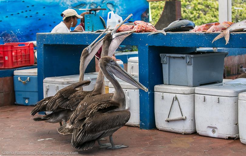 Рыбный рынок на острове Санта-Крус