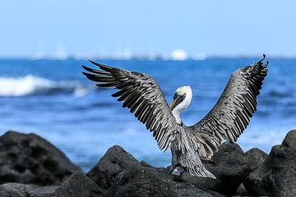 Галапагосы. Остров Изабела