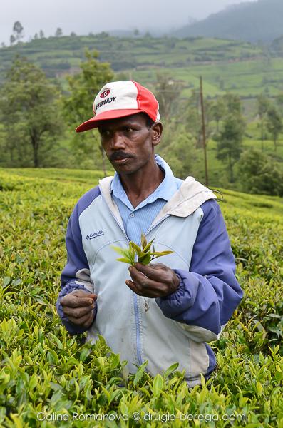 """""""Менеджер"""" чайной плантации, Нувара Элия, Шри-Ланка"""