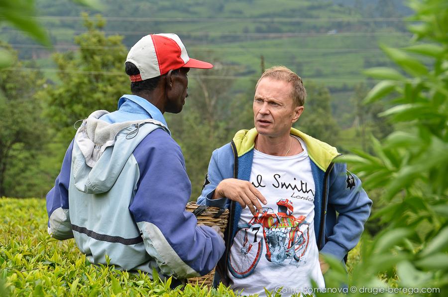 Чайные плантации Нувара Элия, Шри-Ланка, Nuvara Elia, Sri-Lanka
