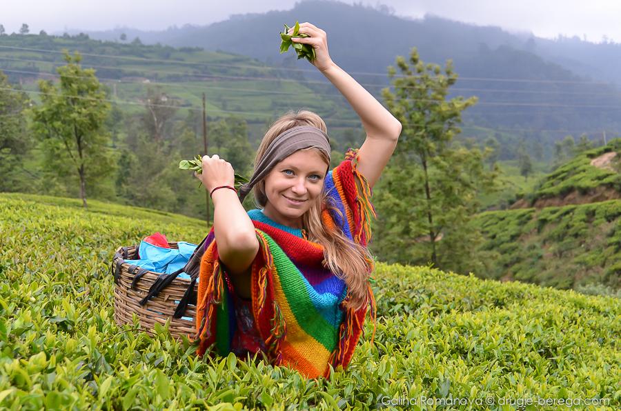 Чайные плантации Нувара Элия, Шри-Ланка, Nuvara, Elia Sri-Lanka