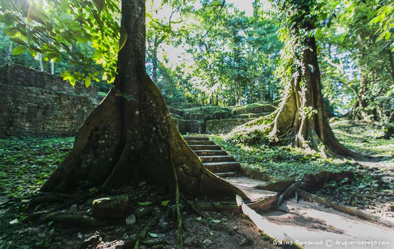 Джунгли Паленке, Мексика ( Palenque, Mexico)