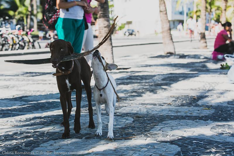 Рио-де-Жанейро, Ипанема: Rio de Janeiro, Ipanema