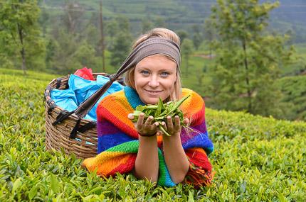 Шри-Ланка: чайные просторы Нувара Элии